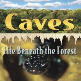 DVD - A Rock and a Hard Place
